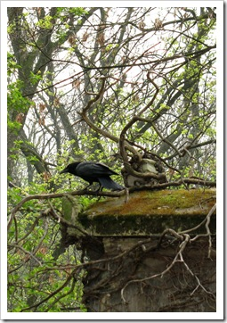 Pere Lachaise crow